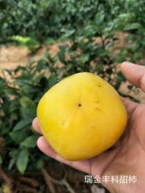 花御所甜柿